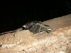 Paukštis #2