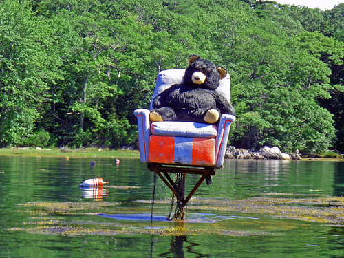 Bear in a chair behind Witch Island near South Bristol, Maine
