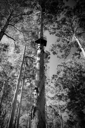 The Dave Evans Bicentennial Tree 4