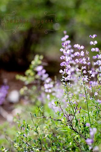 wildflowers 2 WM