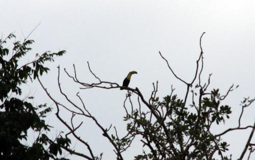 Costa Rica - Día 3 (181)