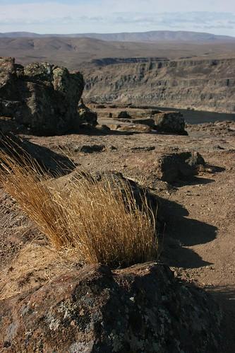 Windy Grass 2