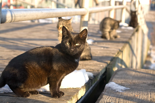 Grill House Kitties on Coney Island's Boardwalk. Photo © silversalty via flickr
