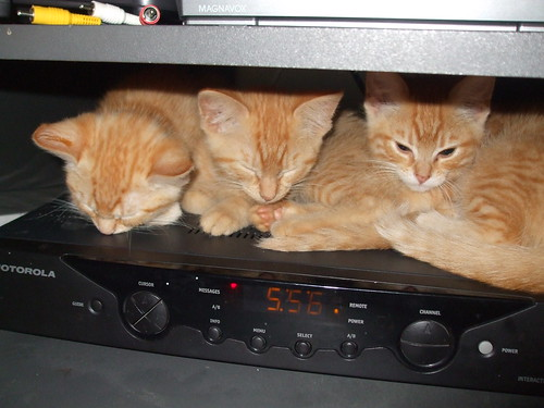 Three Little Kittens by you.