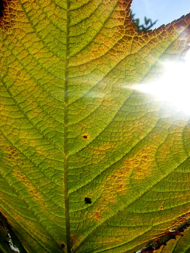 Leaf & Sunshine