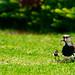 Ave mãe, filho pássaro. por Rubens Nemitz Jr