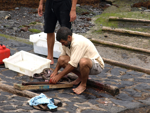 You need guts for this job - fisherman cleaning moray eels