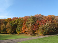Oak foliage during fall color. Photo by Mark Ellison MDNR.