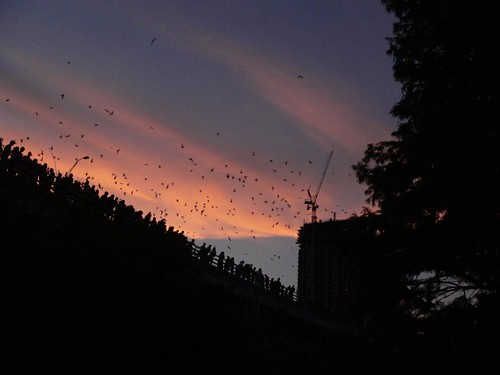 Up to 1.5 million bats summer under the Congress Street Bridge each year. ~via phoch_98, Flickr.com
