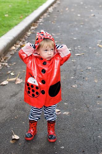 Ladybug - Newtown