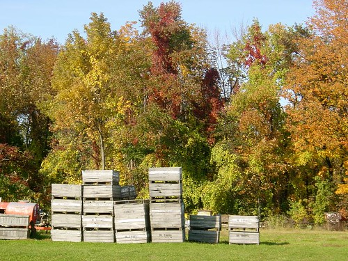 fall colors at the fruit farm