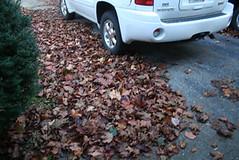 leaves_needtoberaked