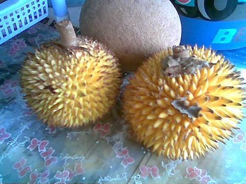Sibu's wild durian - buah pakon