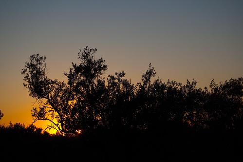 El sol cobarde tras los olivos