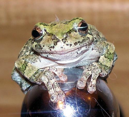 frog 7 - adorable.jpg