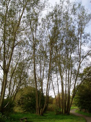 trees in the country park near where Mum and Dad live - taken by Mum