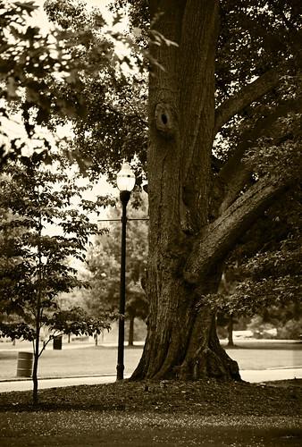 Tree Piedmont