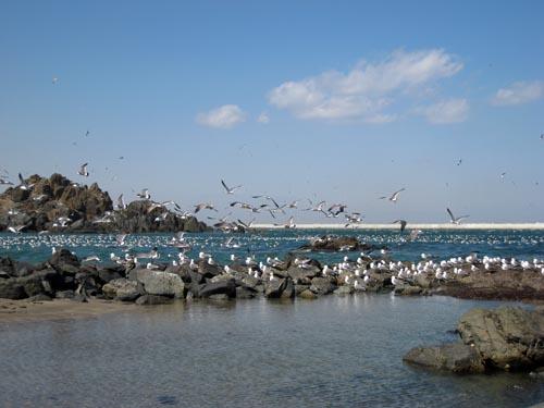 八戸 春の海 6