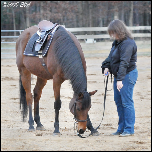 Clicker Training with Wizard