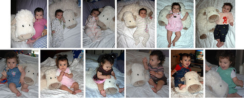 12 Months of Sheep Photos!