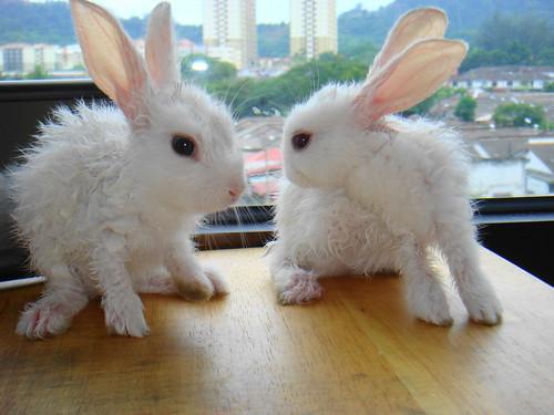 my adorable bunnies