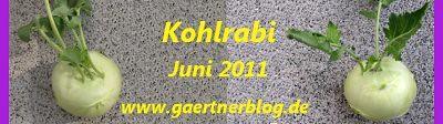 Garten-Koch-Event Juni 2011: Kohlrabi [30.06.2011]