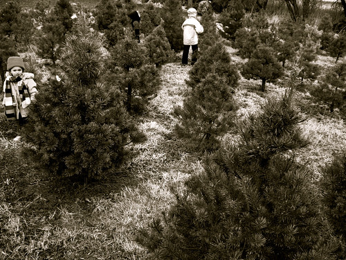 tree farm-can you spy the four of them? by you.