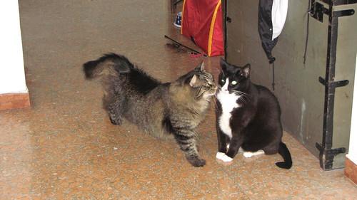 Max and Puddy Tat
