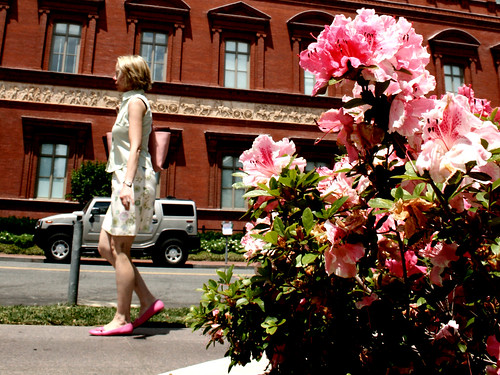 This photo was a complete accident, I was waiting testing the best settings for this photo, and so didn't care if people where in it (usually I like my photos without them), and after going through the photos I found that this ladies shows matched the azaleas. Taken outside of the National Building Museum.