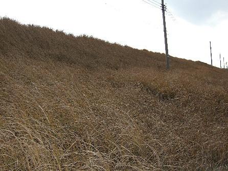 海岸の枯草