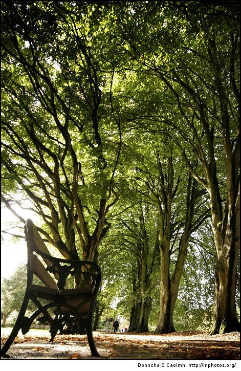 Fitzgerald's Park Bench