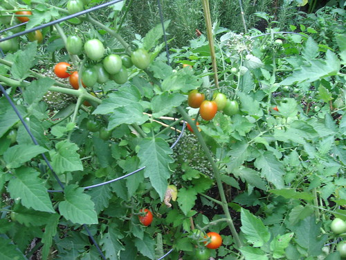 principle borghese tomatoes
