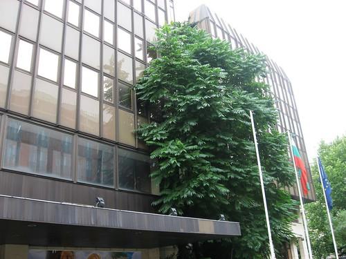 Arbol pegado a la fachada de un banco Berlin zona cercana a Gendarmenmarkt