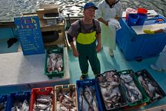 Sunday morning fish, Wellington, New Zealand, ...