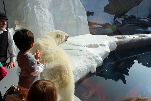 jonas & a polar bear