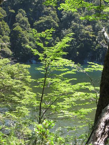 Beech trees and lake