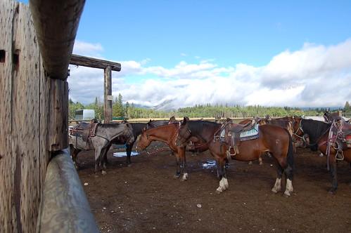 Horseback Riding 019
