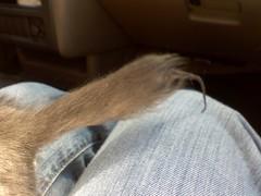 Dead tail