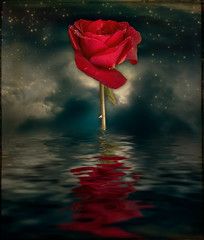 * Every Rose *