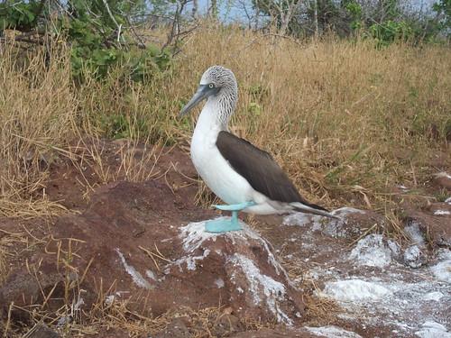 Galapagos 2 108