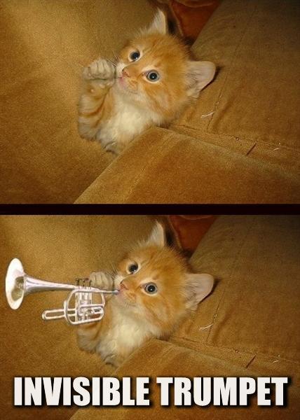 20080329 - Oranjello, the new kitten - 152-5290 - invisible trumpet!