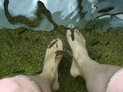 Where 39 s the beef a blog for bad hunters page 2 for Fish pedicure dc