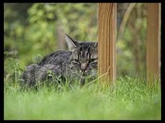 hunter and prey 022