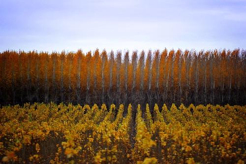 more pretty tree rows
