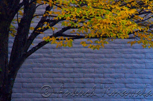 Branch and Brick