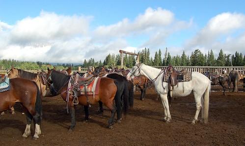 Horseback Riding 017