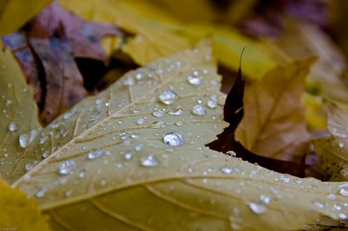 Autumn Rain II
