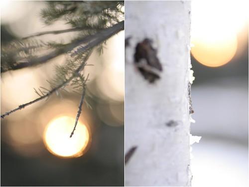 Trees (by Leaca's Philosophy)