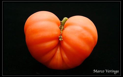 Variety of Inca Tomato from Peru