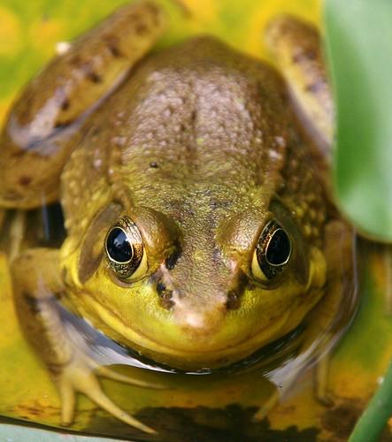 One Happy Frog!